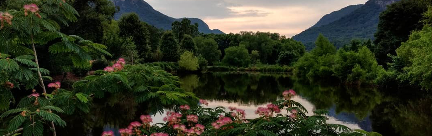 Header_Image_Lake-Lure-Pink-Fowers