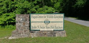 Pisgah Center for Wildlife Education | Bobby N. Setzer State Fish Hatchery