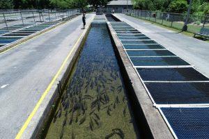 Bobby N. Setzer Fish Hatchery