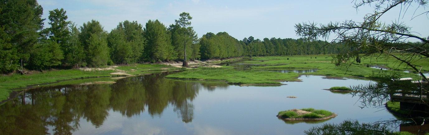 Rhodes Pond Dam