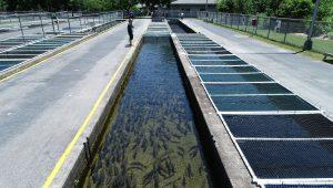 Setzer Fish Hatchery Project Feature