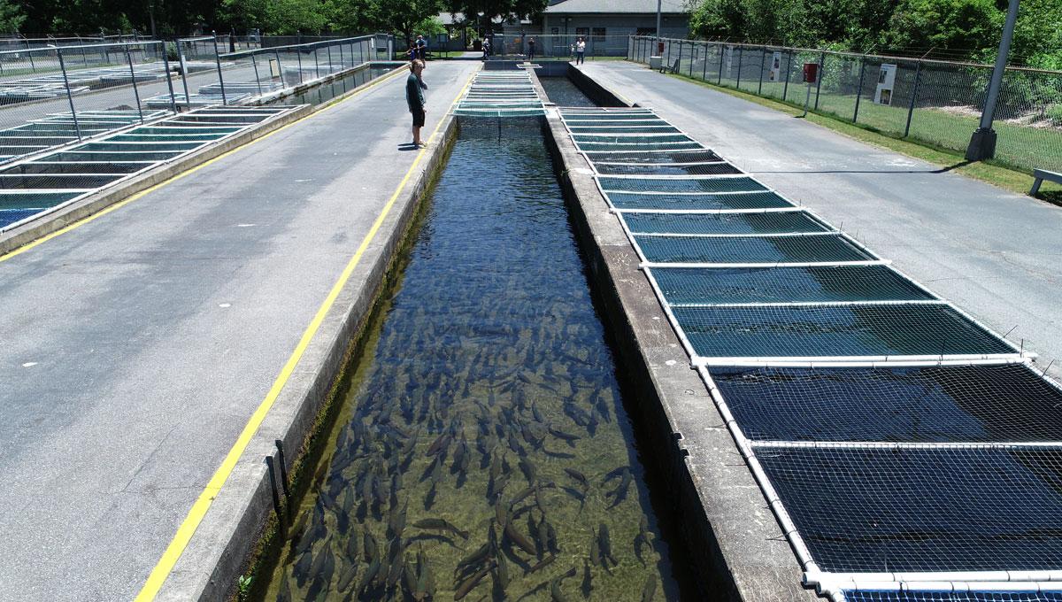 Setzer Fish Hatchery Project Feature