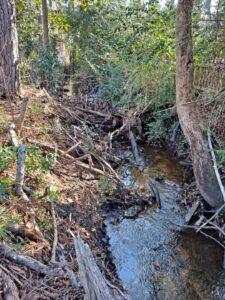 Stream with debris