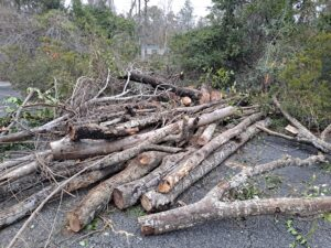 Pile of trees
