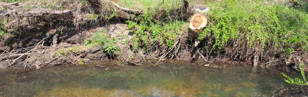 The City of Wilmington's Emergency Watershed Protection Project Complete